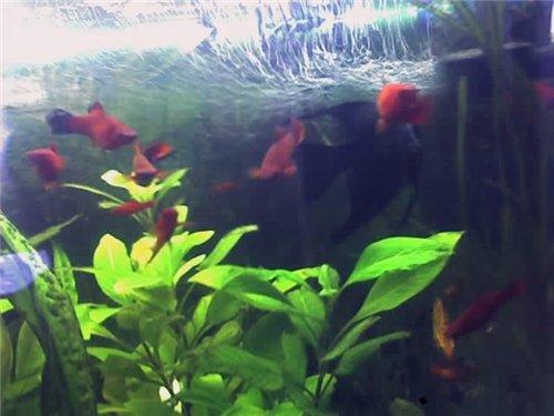 Первый аквариум - Страница 3 7335162b0cb3