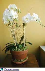 Горшки для орхидей 9942a657ed42t