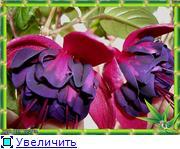ФУКСИИ В ХАБАРОВСКЕ  3bf7c12ed217t