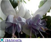 ФУКСИИ В ХАБАРОВСКЕ  - Страница 11 D6c4490c279et