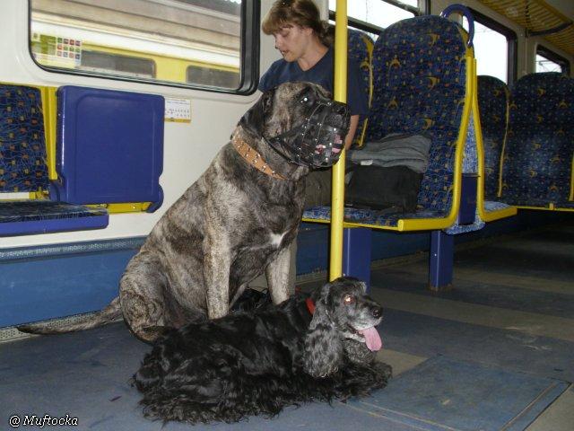 Наши собаки, друзья и гости, кот Мензурка C2b7136062fc