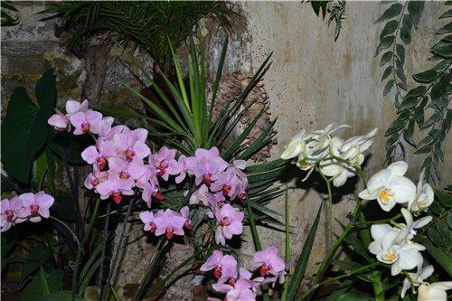Выставка орхидей Никитского ботанического сада F296053244ed