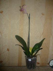 декоротивно-лиственные и красивоцветущие растения - Страница 3 E1e578520d39