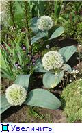 Растения для альпийской горки. - Страница 2 F8e757ea051ft