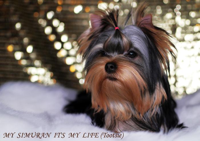 My Simuran It's My Life (Тутси)  20dff2d2e127