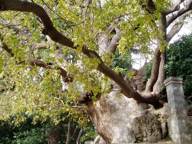 Парад хризантем в Никитском ботаническом саду. Крым  A2da0d6ac902