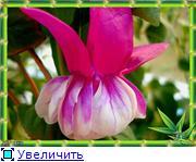ФУКСИИ В ХАБАРОВСКЕ  A86548d7eea3t