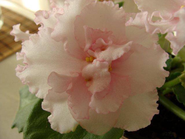 Мои цветочки - Страница 13 61dd119a6590