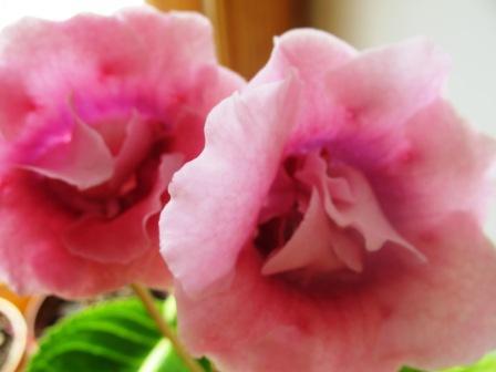 Pink Pet 1e5ff0977712