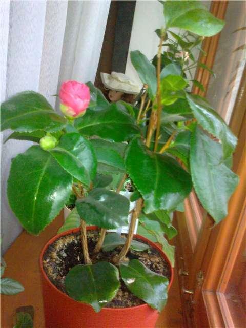 И мои хвастушки-цветушки! - Страница 2 4f00b823577b