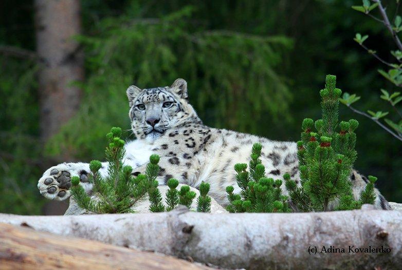 Швейцарский зоопарк - Страница 2 42701396bfd4