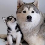 Аватары с животными - Страница 2 Cf4a329d37d2