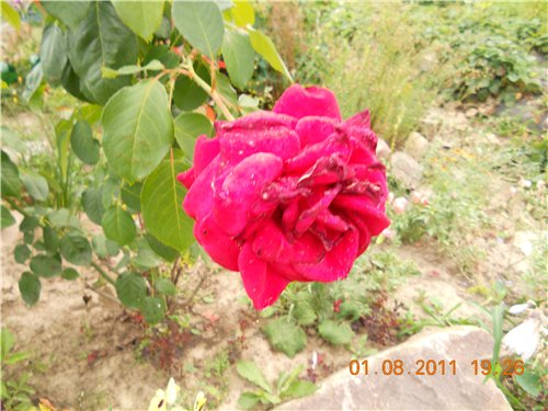 Дачные красоты - Страница 6 A89c49836fbd