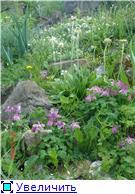 Растения для альпийской горки. - Страница 2 D716732c307bt