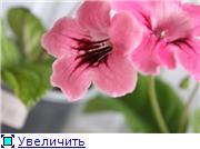Семена глоксиний и стрептокарпусов почтой - Страница 2 23ea44e3258ft