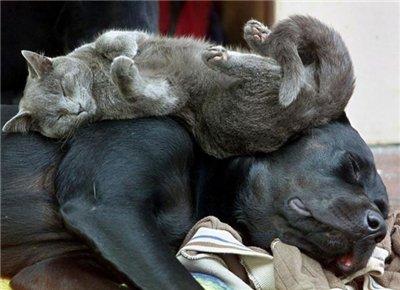 Сама по себе гулёна (о кошках) - Страница 2 248bbafe56c9