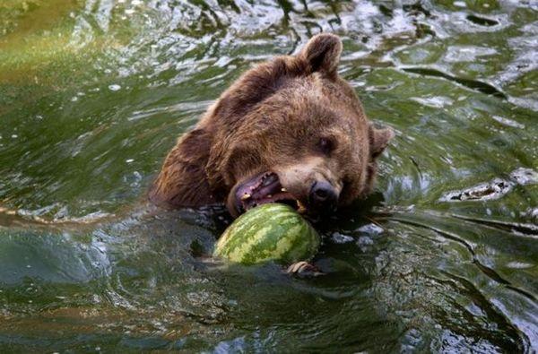 Ничто человеческое медведям не чуждо 8c5567bbaeb8