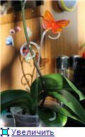 Стикеры и ярлыки для растений. Опоры для цветоносов. - Страница 5 9965269eda90t