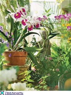 Размещение орхидей 7064dd56fdb8t