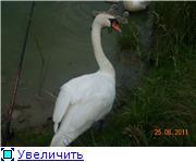 Птичий двор 4d6791c61cb2t