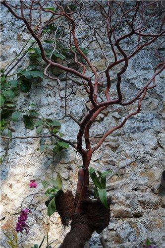 Выставка орхидей Никитского ботанического сада 7eca67b27fda