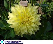 Георгины в цвету - Страница 2 2adfe0c06ddet
