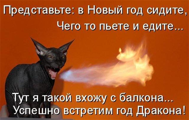 "Курильский бобтейл питомник ""Vitom Fes"" E5688186ba65"