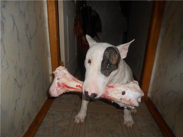 Чем вы кормите своих собак? - Страница 8 96e17b7274a7