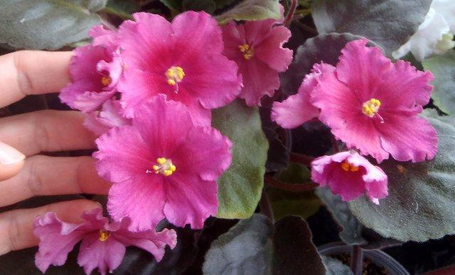 ТЗ-Аленький цветочек (Морев) 8ca38e4bfbdc