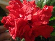 Садовые многолетние цветы - давайте меняться - Страница 3 D153da7ebb3ft