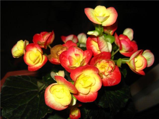 Цветочки комнатные!...и не только... 25584e0f567e