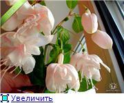 ФУКСИИ В ХАБАРОВСКЕ  - Страница 2 356906c79a1at
