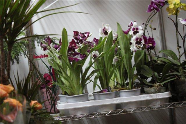 Выставка ландшафт и приусадебное хозяйство 2011, Алматы. - Страница 2 D0c3d3e56da2