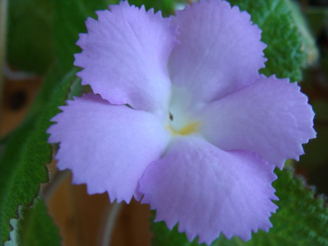 Мои цветочки - Страница 22 011138f7c929