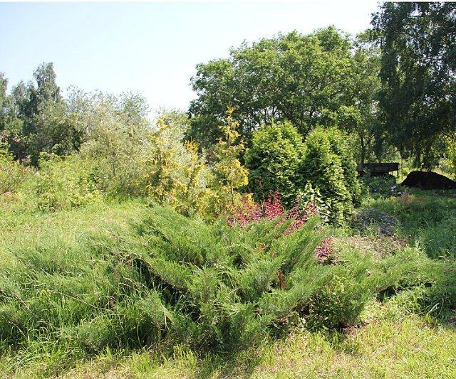 Экскурсия по Ботаническому Саду 98808fa21056
