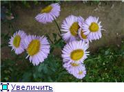 Помогите опознать растение. 523b2aad3645t
