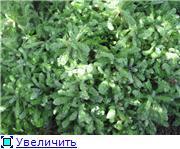 Растения для альпийской горки. 0ab4db975e10t