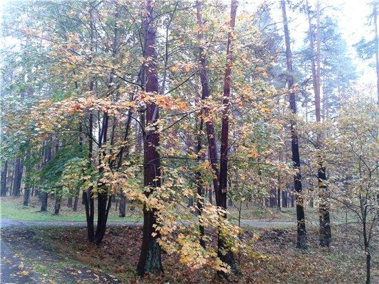 Осень, осень ... как ты хороша...( наше фотонастроение) - Страница 5 C5ae3bdba9a6