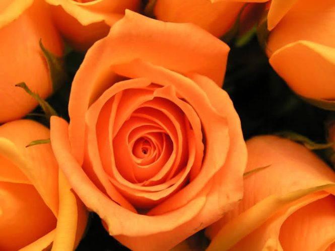 Назови цвет - Страница 9 Df50a605fb87
