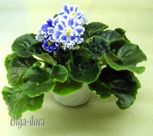 Цветение к Н. Г. (Olga-flora) - Страница 5 578b9576d6fd