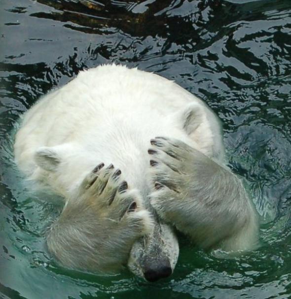 Ничто человеческое медведям не чуждо D599ccb132a0