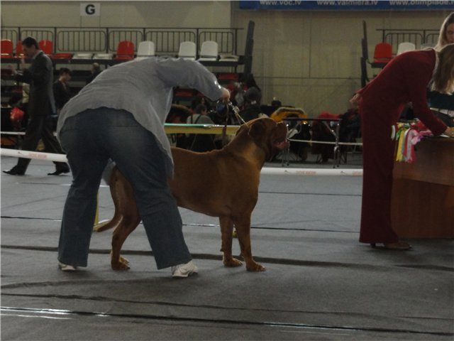 19.02.11. NATIONAL DOG SHOWS IN VALMIERA, LATVIA 291657fb03a9