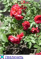 Лето в наших садах - Страница 3 Ba9e868e505dt