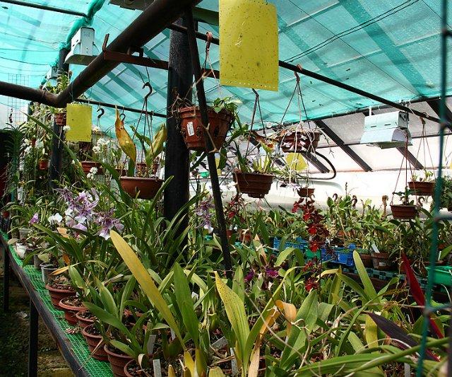 Экскурсия по Ботаническому Саду 1db72352f8e5