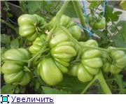 Овощи - Страница 4 39fbaaefe939t