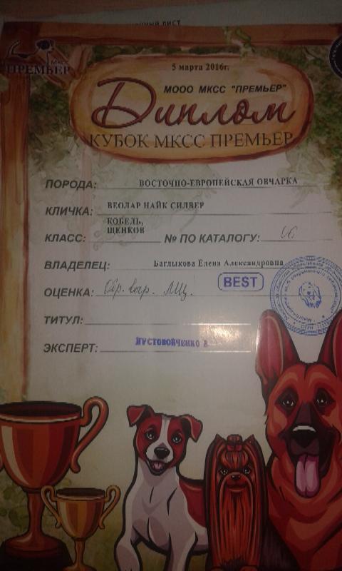 найк - ВОСТОЧНО-ЕВРОПЕЙСКАЯ ОВЧАРКА ВЕОЛАР НАЙК - Страница 2 Da055e93c08a