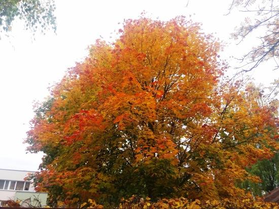 Осень, осень ... как ты хороша...( наше фотонастроение) - Страница 8 07e93aa2542c