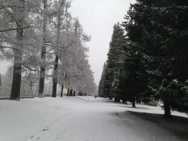 """"""" Есть городок в одном прекрасном парке...""""  ( Пушкин и Екатерининский парк ) - Страница 4 0237df22661d"""