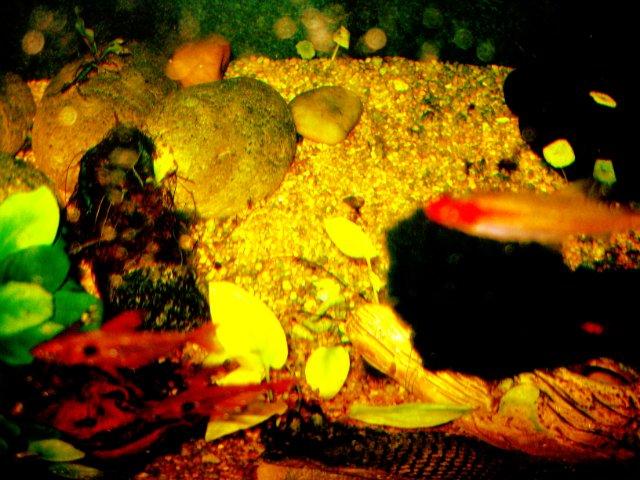 Первый аквариум - Страница 3 7463fe1daf31
