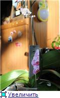 Стикеры и ярлыки для растений. Опоры для цветоносов. - Страница 5 Bd6736448f3bt